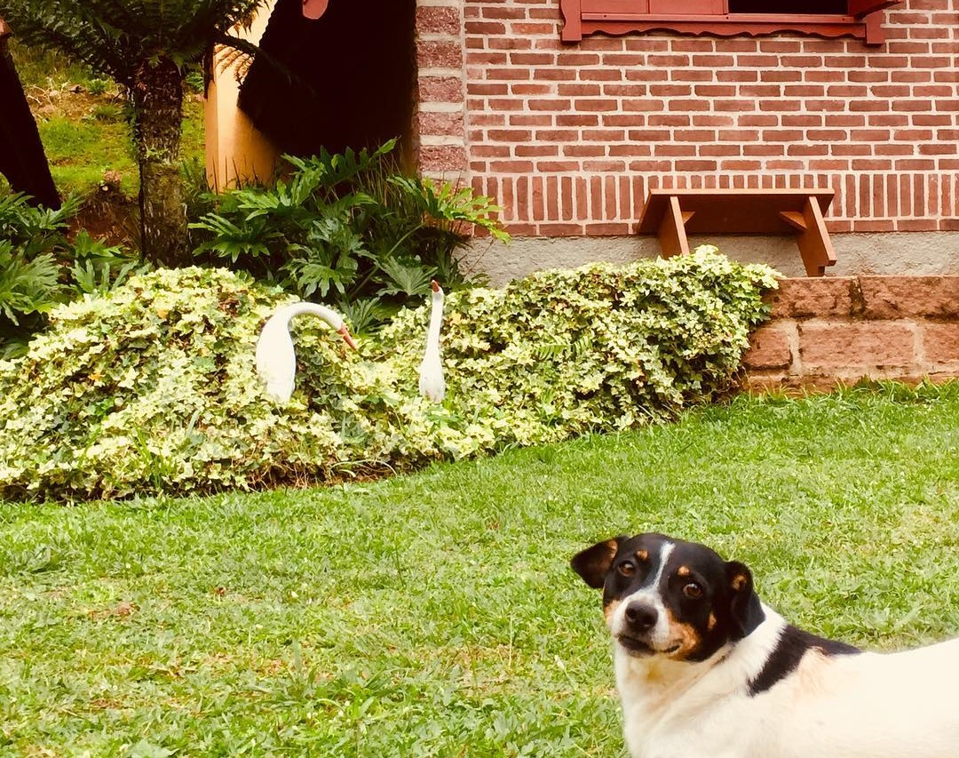 Hotel que aceita cachorro em Gramado: você conhece os Chalés Família Fioreze?