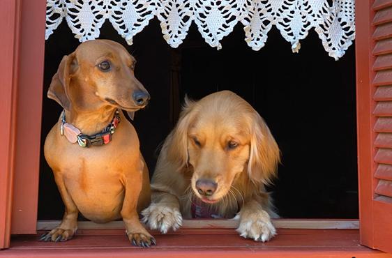 4 locais pet friendly em Gramado!